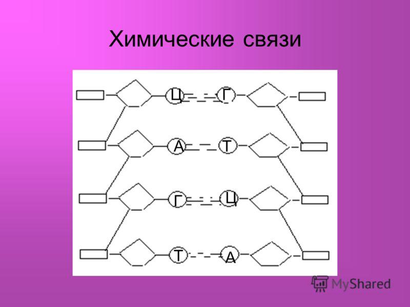 Химические связи ЦГ АТ Г Ц Т А