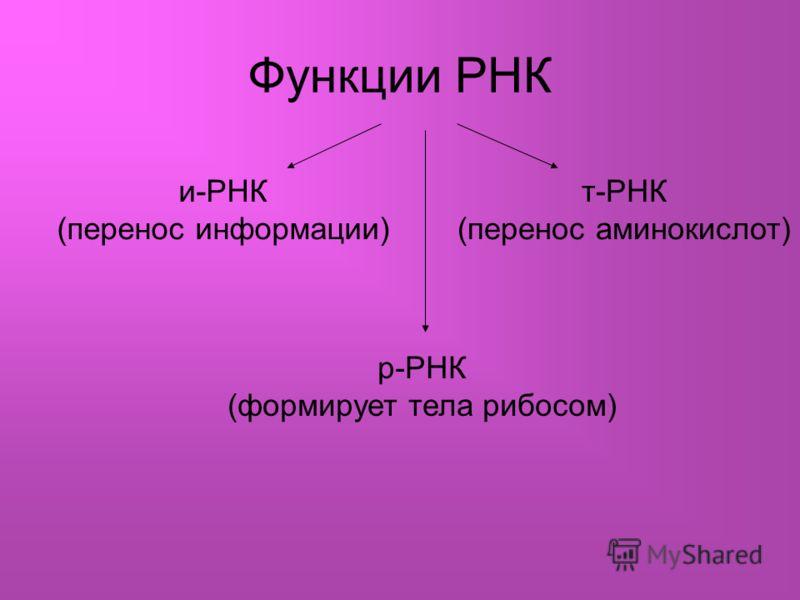 Функции РНК и-РНК (перенос информации) т-РНК (перенос аминокислот) р-РНК (формирует тела рибосом)