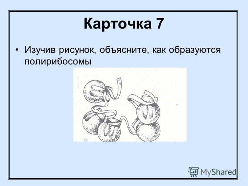 Карточка 7 Изучив рисунок, объясните, как образуются полирибосомы