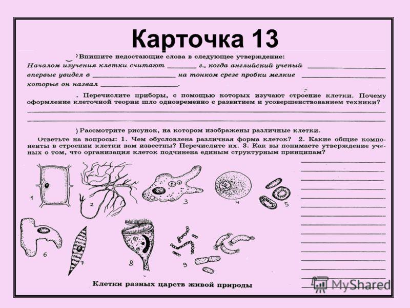 Карточка 13