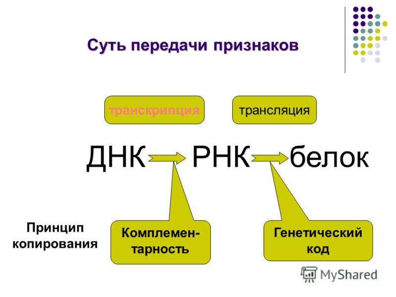 Суть передачи признаков ДНКРНКбелок транскрипциятрансляция Комплемен- тарность Принцип копирования Генетический код
