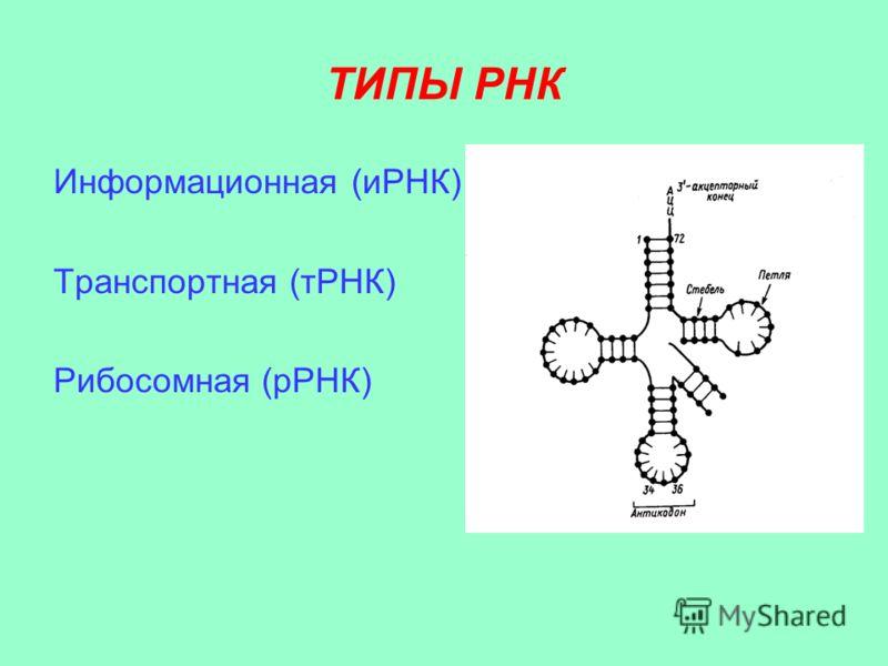 ТИПЫ РНК Информационная (иРНК) Транспортная (тРНК) Рибосомная (рРНК)