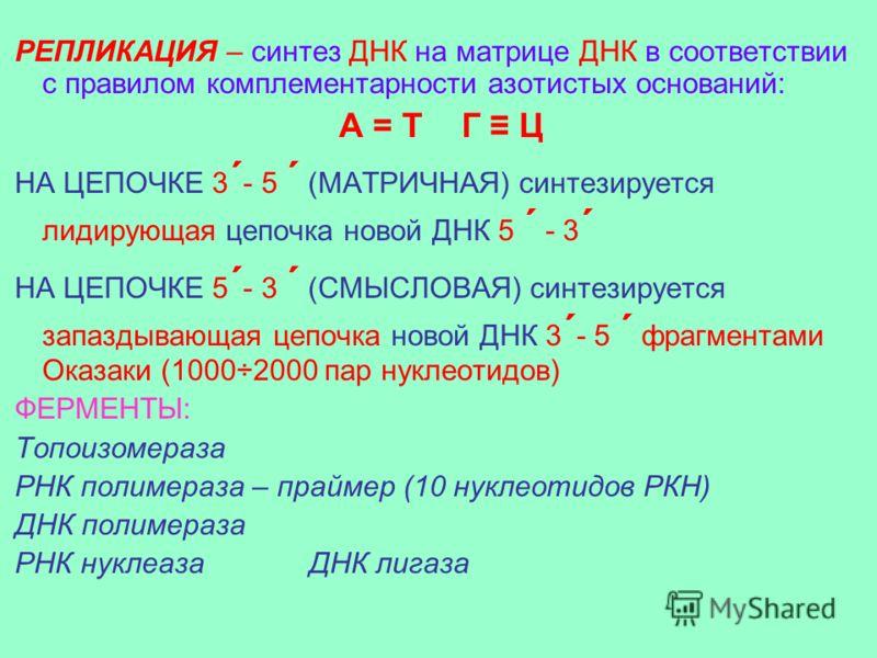 РЕПЛИКАЦИЯ – синтез ДНК на матрице ДНК в соответствии с правилом комплементарности азотистых оснований: А = Т Г Ц НА ЦЕПОЧКЕ 3 ´ - 5 ´ (МАТРИЧНАЯ) синтезируется лидирующая цепочка новой ДНК 5 ´ - 3 ´ НА ЦЕПОЧКЕ 5 ´ - 3 ´ (СМЫСЛОВАЯ) синтезируется зап
