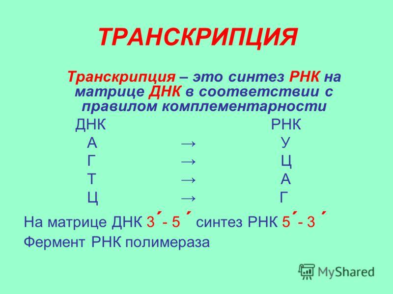комплементарности ДНК РНК