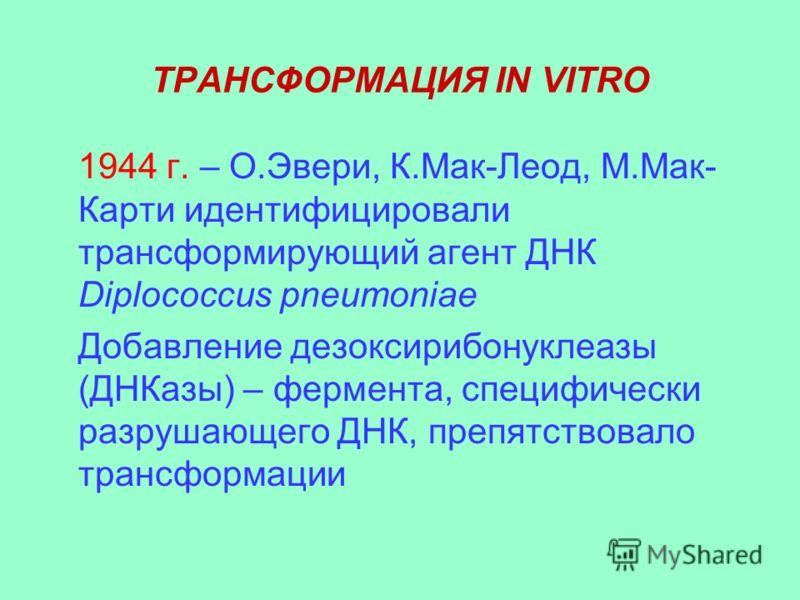 ТРАНСФОРМАЦИЯ IN VITRO 1944 г. – О.Эвери, К.Мак-Леод, М.Мак- Карти идентифицировали трансформирующий агент ДНК Diplococcus pneumoniae Добавление дезоксирибонуклеазы (ДНКазы) – фермента, специфически разрушающего ДНК, препятствовало трансформации
