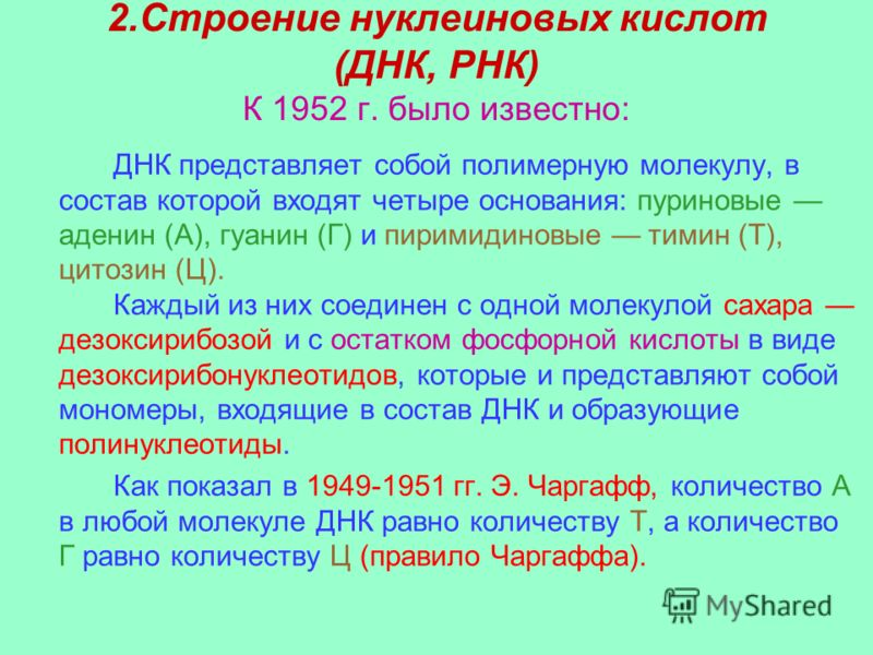 2.Строение нуклеиновых кислот (ДНК, РНК) К 1952 г. было известно: ДНК представляет собой полимерную молекулу, в состав которой входят четыре основания: пуриновые аденин (А), гуанин (Г) и пиримидиновые тимин (Т), цитозин (Ц). Каждый из них соединен с