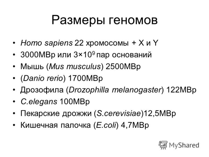Размеры геномов Homo sapiens 22 хромосомы + X и Y 3000МВр или 3×10 9 пар оснований Мышь (Mus musculus) 2500МВр (Danio rerio) 1700MBp Дрозофила (Drozophilla melanogaster) 122MBp C.elegans 100MBp Пекарские дрожжи (S.cerevisiae)12,5МВр Кишечная палочка