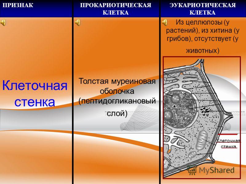 ПРИЗНАКПРОКАРИОТИЧЕСКАЯ КЛЕТКА ЭУКАРИОТИЧЕСКАЯ КЛЕТКА Цитоплазма тическая ДНК Плазмиды – маленькие кольцевые ДНК в цитоплазме ДНК митохондрий, хлоропластов