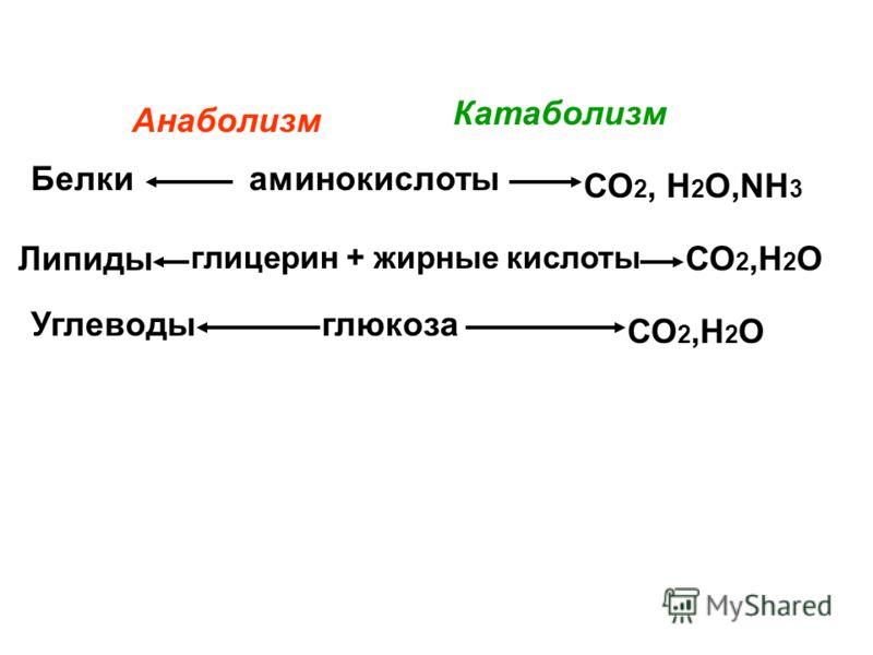 катаболизм катаболизмВторой катаболизм катаболизм включает реакции, связанные с распадом веществ, их окислением и выведением из организма продуктов распада Катаболи́змКатаболи́зм процесс метаболического распада, разложения на более простые вещества и