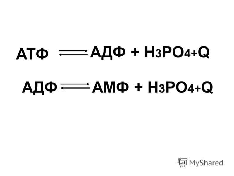 АТФ: аденинрибоза 3 остатка фосф. кислоты азотистое основание углевод