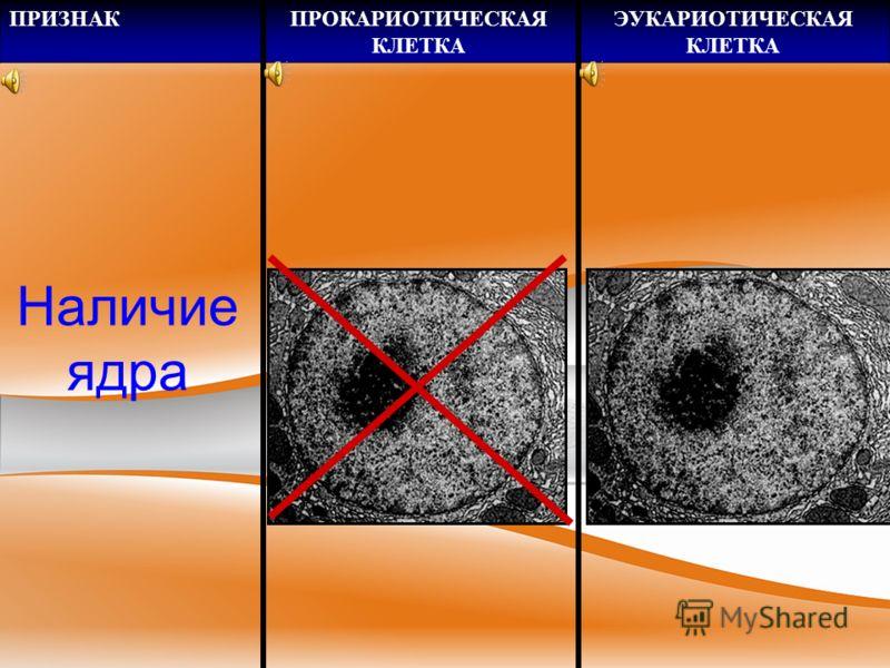 ПРИЗНАКПРОКАРИОТИЧЕСКАЯ КЛЕТКА ЭУКАРИОТИЧЕСКАЯ КЛЕТКА Размер клеток 0,5-10 мкм 40-100 мкм