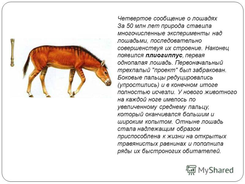 Четвертое сообщение о лошадях За 50 млн лет природа ставила многочисленные эксперименты над лошадьми, последовательно совершенствуя их строение. Наконец появился плиогиппус, первая однопалая лошадь. Первоначальный трехпалый