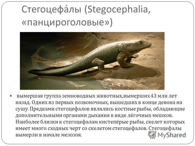 Стегоцефалы (Stegocephalia, « панцироголовые ») вымершая группа земноводных животных, вымерших 43 млн лет назад. Одних из первых позвоночных, вышедших в конце девона на сушу. Предками стегоцефалов являлись костные рыбы, обладающие дополнительными орг