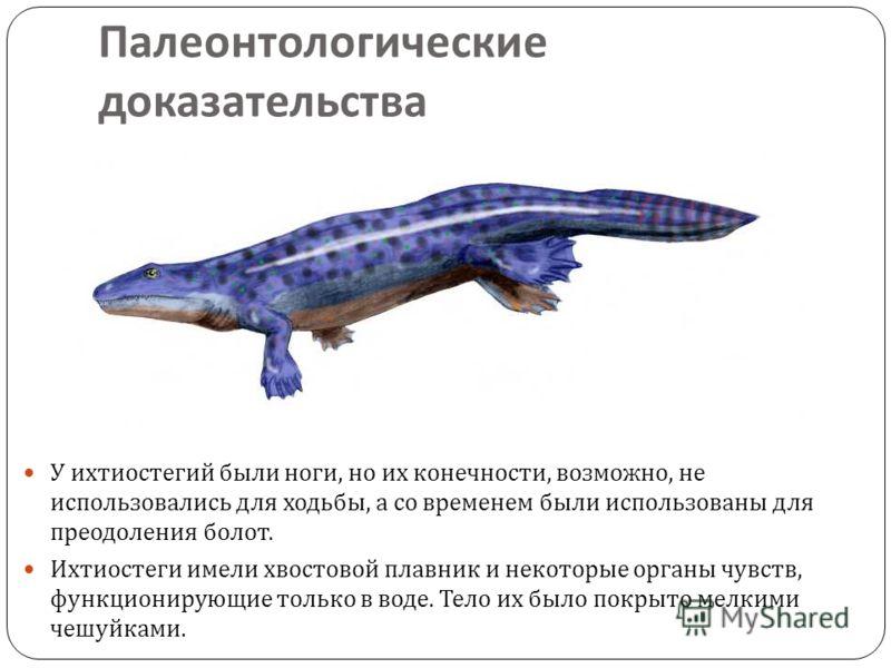 Палеонтологические доказательства У ихтиостегий были ноги, но их конечности, возможно, не использовались для ходьбы, а со временем были использованы для преодоления болот. Ихтиостеги имели хвостовой плавник и некоторые органы чувств, функционирующие