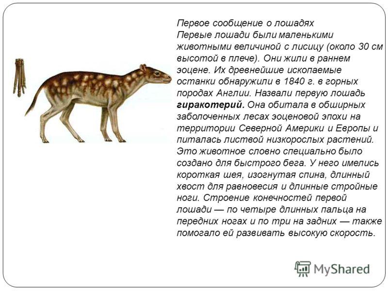 Первое сообщение о лошадях Первые лошади были маленькими животными величиной с лисицу (около 30 см высотой в плече). Они жили в раннем эоцене. Их древнейшие ископаемые останки обнаружили в 1840 г. в горных породах Англии. Назвали первую лошадь гирако