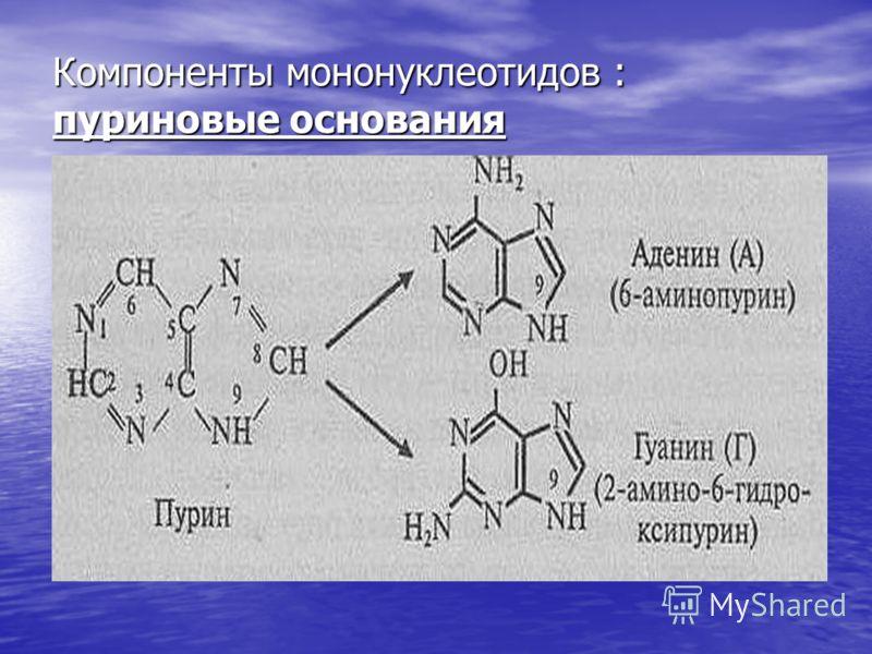 Компоненты мононуклеотидов : пуриновые основания