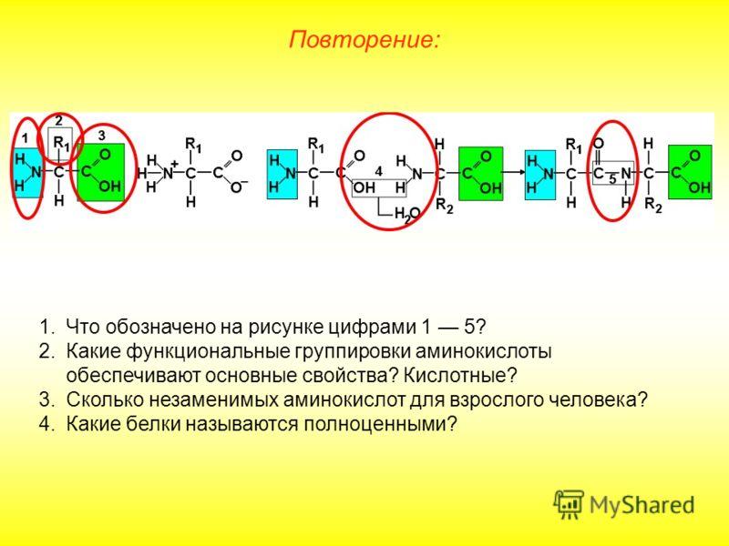 Повторение: 1.Что обозначено на рисунке цифрами 1 5? 2.Какие функциональные группировки аминокислоты обеспечивают основные свойства? Кислотные? 3.Сколько незаменимых аминокислот для взрослого человека? 4.Какие белки называются полноценными?