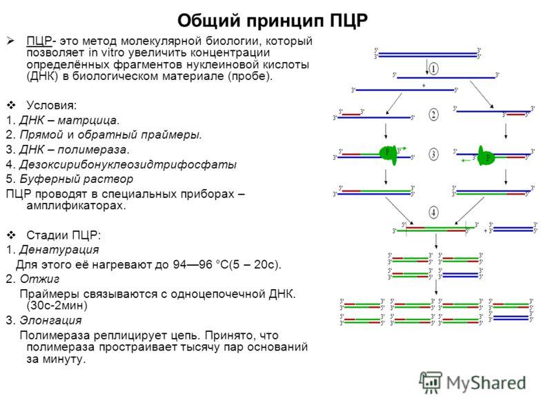 Общий принцип ПЦР ПЦР- это метод молекулярной биологии, который позволяет in vitro увеличить концентрации определённых фрагментов нуклеиновой кислоты (ДНК) в биологическом материале (пробе). Условия: 1. ДНК – матрцица. 2. Прямой и обратный праймеры.