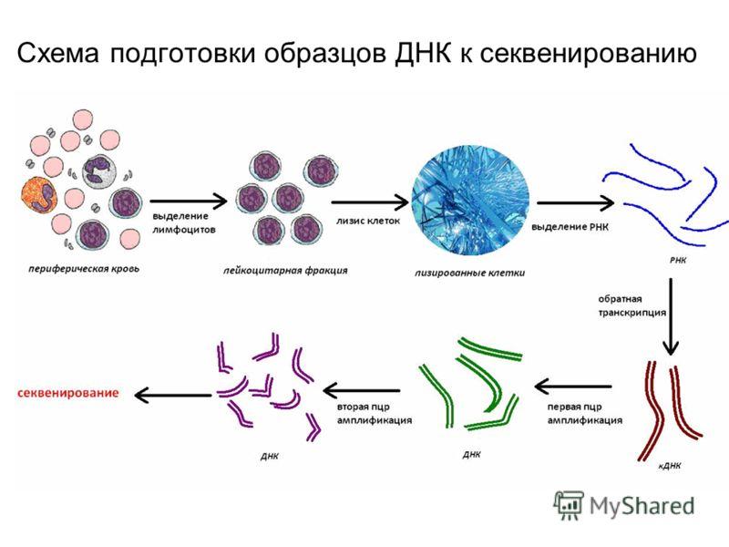 Схема подготовки образцов ДНК к секвенированию