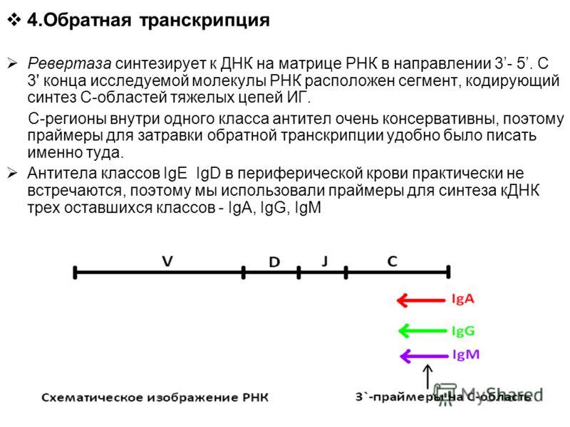 4.Обратная транскрипция Ревертаза синтезирует к ДНК на матрице РНК в направлении 3- 5. С 3' конца исследуемой молекулы РНК расположен сегмент, кодирующий синтез С-областей тяжелых цепей ИГ. С-регионы внутри одного класса антител очень консервативны,