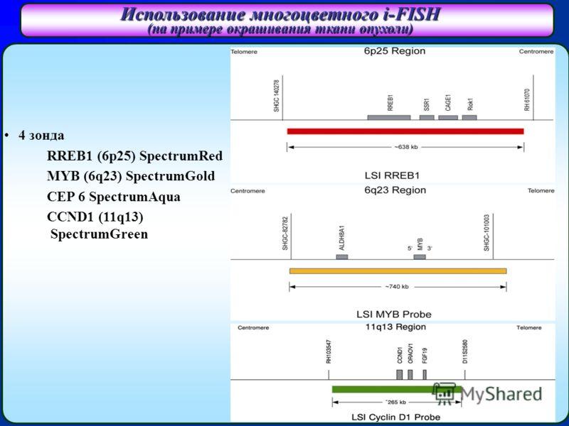 Использование многоцветного i-FISH (на примере окрашивания ткани опухоли) 4 зонда RREB1 (6p25) SpectrumRed MYB (6q23) SpectrumGold CEP 6 SpectrumAqua CCND1 (11q13) SpectrumGreen
