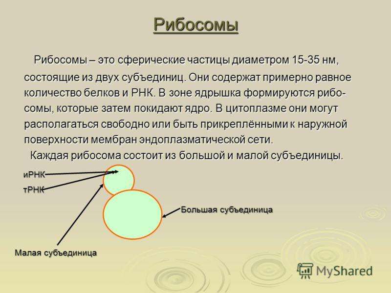 Рибосомы Рибосомы – это сферические частицы диаметром 15-35 нм, Рибосомы – это сферические частицы диаметром 15-35 нм, состоящие из двух субъединиц. Они содержат примерно равное количество белков и РНК. В зоне ядрышка формируются рибо- сомы, которые