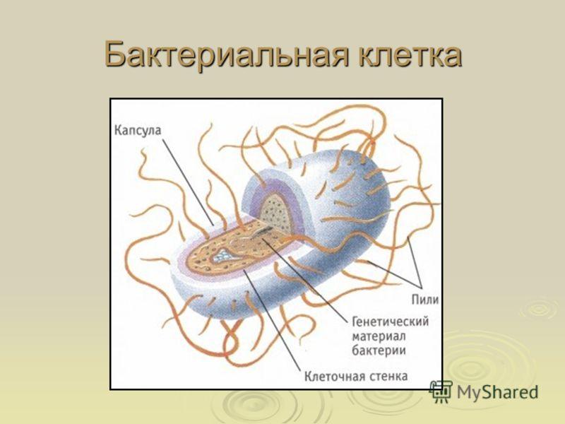Бактериальная клетка
