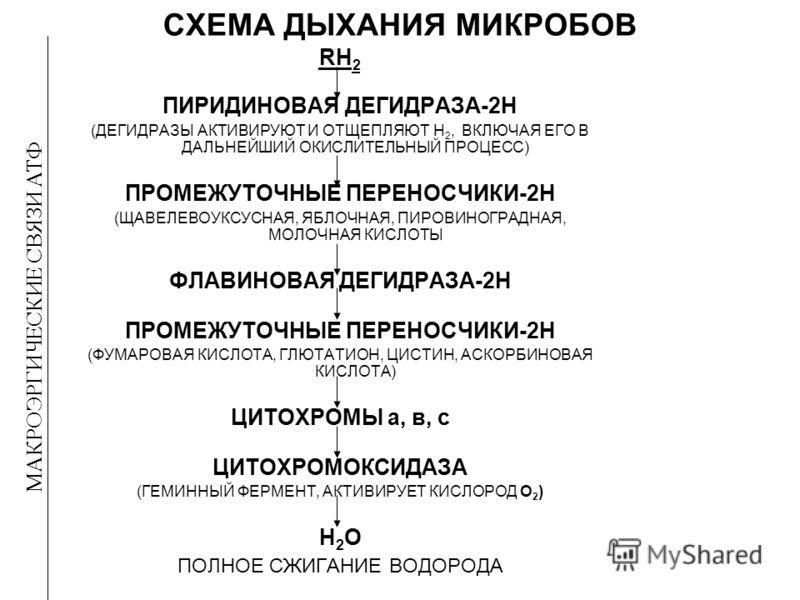 СХЕМА ДЫХАНИЯ МИКРОБОВ RH 2 ПИРИДИНОВАЯ ДЕГИДРАЗА-2Н (ДЕГИДРАЗЫ АКТИВИРУЮТ И ОТЩЕПЛЯЮТ Н 2, ВКЛЮЧАЯ ЕГО В ДАЛЬНЕЙШИЙ ОКИСЛИТЕЛЬНЫЙ ПРОЦЕСС) ПРОМЕЖУТОЧНЫЕ ПЕРЕНОСЧИКИ-2Н (ЩАВЕЛЕВОУКСУСНАЯ, ЯБЛОЧНАЯ, ПИРОВИНОГРАДНАЯ, МОЛОЧНАЯ КИСЛОТЫ ФЛАВИНОВАЯ ДЕГИДРА