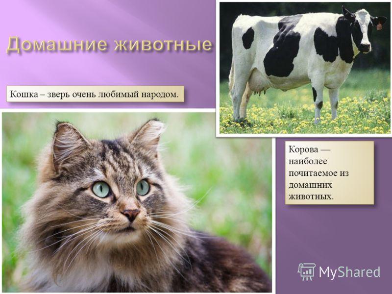 Кошка – зверь очень любимый народом. Корова наиболее почитаемое из домашних животных.