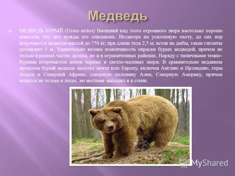 МЕДВЕДЬ БУРЫЙ (Ursus arctos) Внешний вид этого огромного зверя настолько хорошо известен, что нет нужды его описывать. Несмотря на усиленную охоту, до сих пор встречаются медведи массой до 750 кг, при длине тела 2,5 м ; встав на дыбы, такие гиганты д
