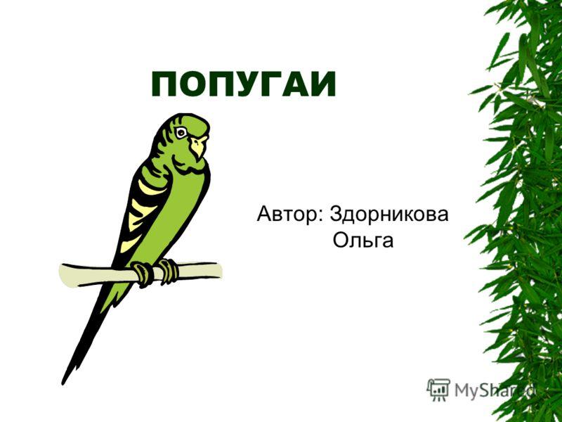 ПОПУГАИ Автор: Здорникова Ольга