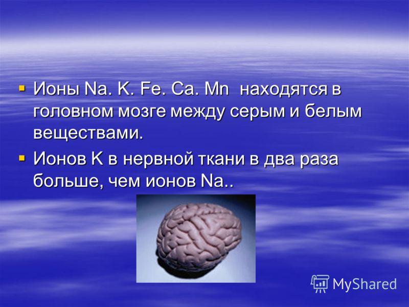 Ионы Na. K. Fe. Ca. Mn находятся в головном мозге между серым и белым веществами. Ионы Na. K. Fe. Ca. Mn находятся в головном мозге между серым и белым веществами. Ионов K в нервной ткани в два раза больше, чем ионов Na.. Ионов K в нервной ткани в дв