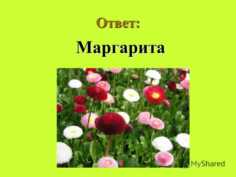 Ответ: Маргарита Маргарита