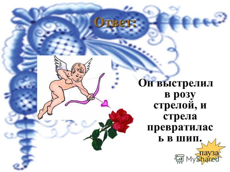 Ответ: Он выстрелил в розу стрелой, и стрела превратилас ь в шип. пауза