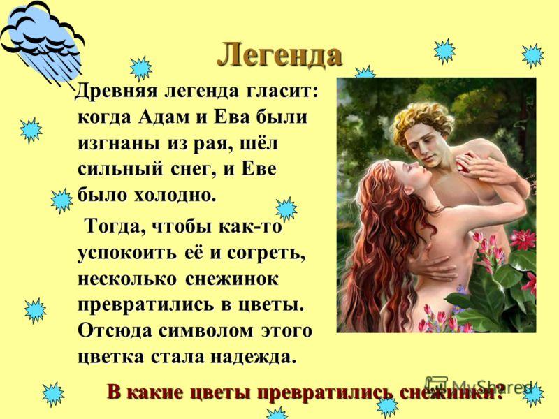 Легенда Древняя легенда гласит: когда Адам и Ева были изгнаны из рая, шёл сильный снег, и Еве было холодно. Древняя легенда гласит: когда Адам и Ева были изгнаны из рая, шёл сильный снег, и Еве было холодно. Тогда, чтобы как-то успокоить её и согреть