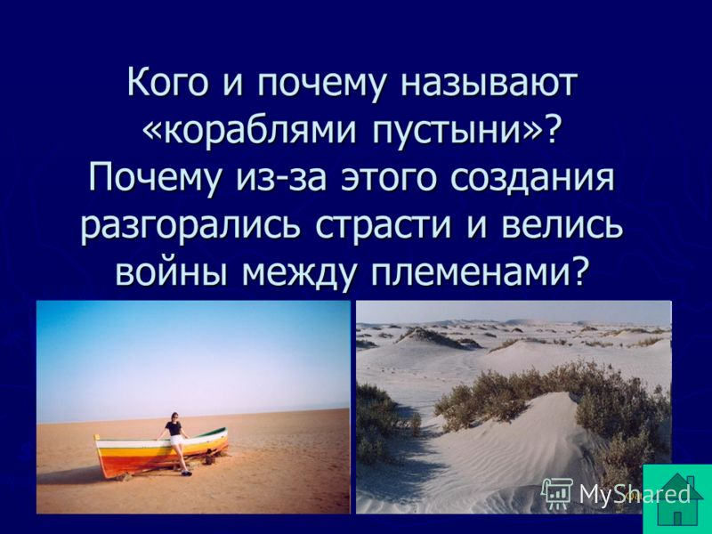 Кого и почему называют «кораблями пустыни»? Почему из-за этого создания разгорались страсти и велись войны между племенами?