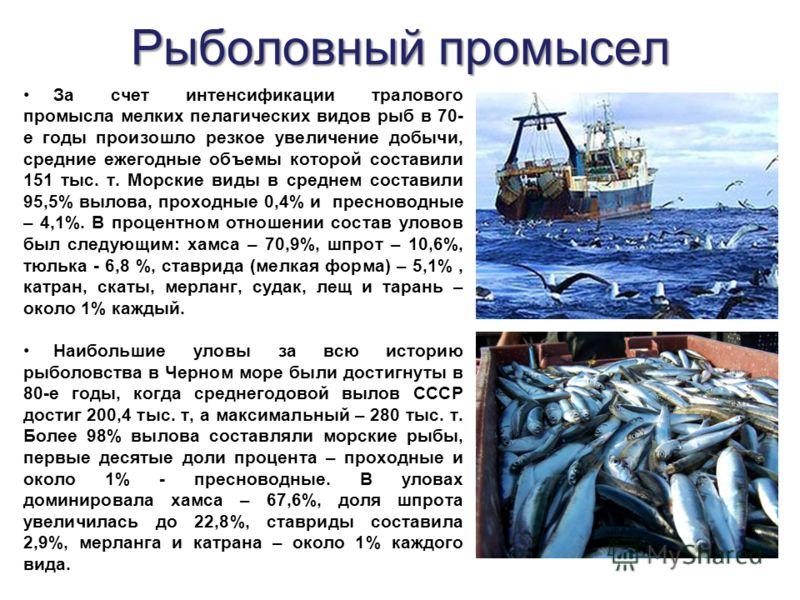 За счет интенсификации тралового промысла мелких пелагических видов рыб в 70- е годы произошло резкое увеличение добычи, средние ежегодные объемы которой составили 151 тыс. т. Морские виды в среднем составили 95,5% вылова, проходные 0,4% и пресноводн