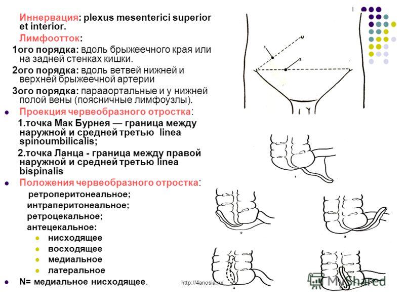 Иннервация: plexus mesenterici superior et interior. Лимфоотток: 1ого порядка: вдоль брыжеечного края или на задней стенках кишки. 2ого порядка: вдоль ветвей нижней и верхней брыжеечной артерии 3ого порядка: парааортальные и у нижней полой вены (пояс
