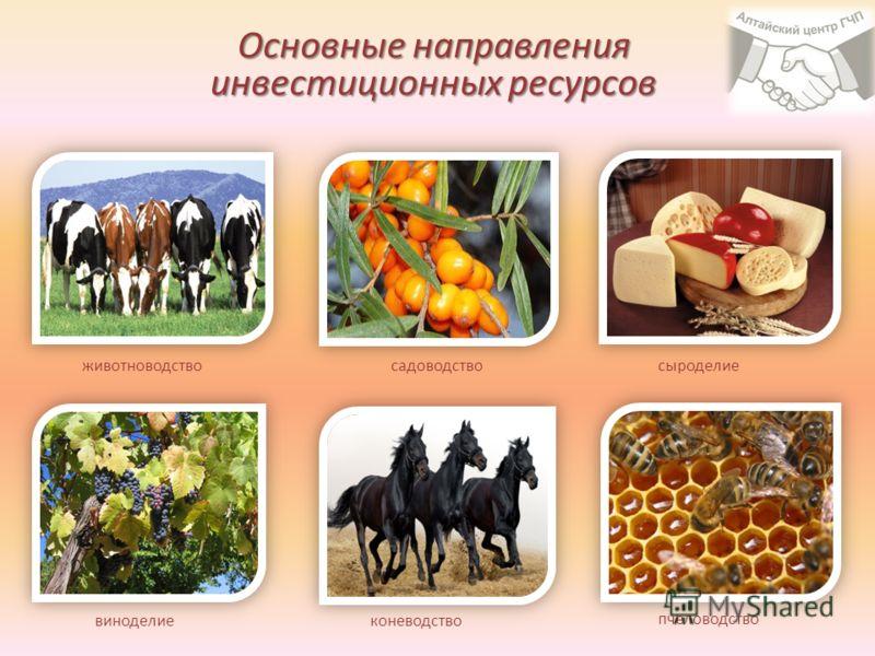 Основные направления инвестиционных ресурсов коневодство пчеловодство сыроделиесадоводство животноводство виноделие