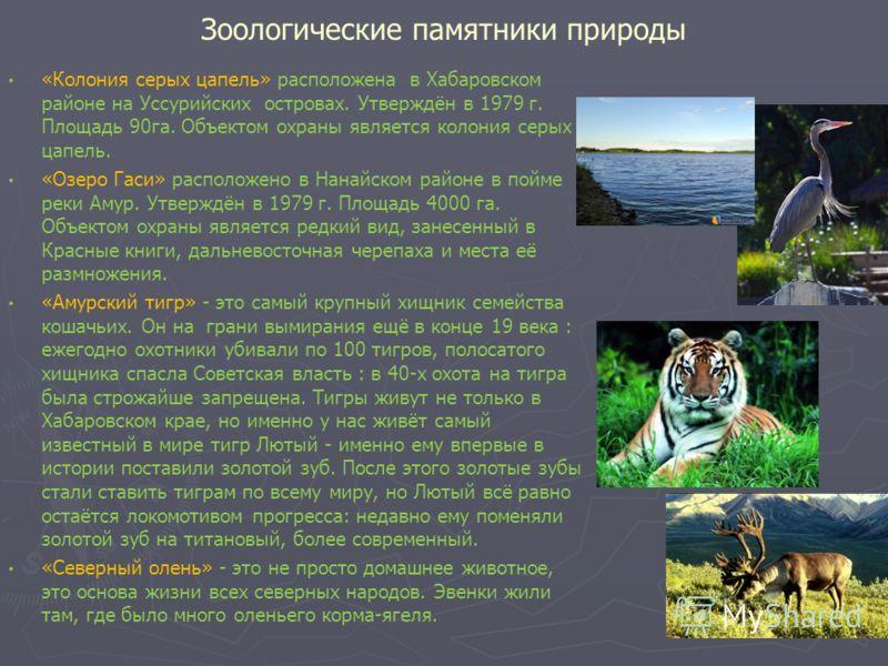 Зоологические памятники природы «Колония серых цапель» расположена в Хабаровском районе на Уссурийских островах. Утверждён в 1979 г. Площадь 90га. Объектом охраны является колония серых цапель. «Озеро Гаси» расположено в Нанайском районе в пойме реки