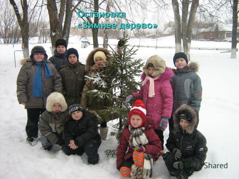 Остановка «Зимнее дерево»