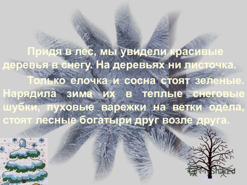 Придя в лес, мы увидели красивые деревья в снегу. На деревьях ни листочка. Только елочка и сосна стоят зеленые. Нарядила зима их в теплые снеговые шубки, пуховые варежки на ветки одела, стоят лесные богатыри друг возле друга.
