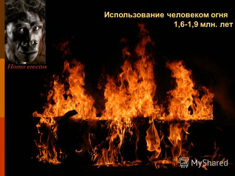 Использование человеком огня 1,6-1,9 млн. лет Homo erectus