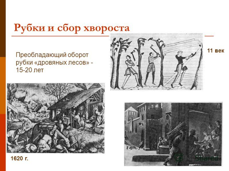 Рубки и сбор хвороста 11 век 1620 г. Преобладающий оборот рубки «дровяных лесов» - 15-20 лет
