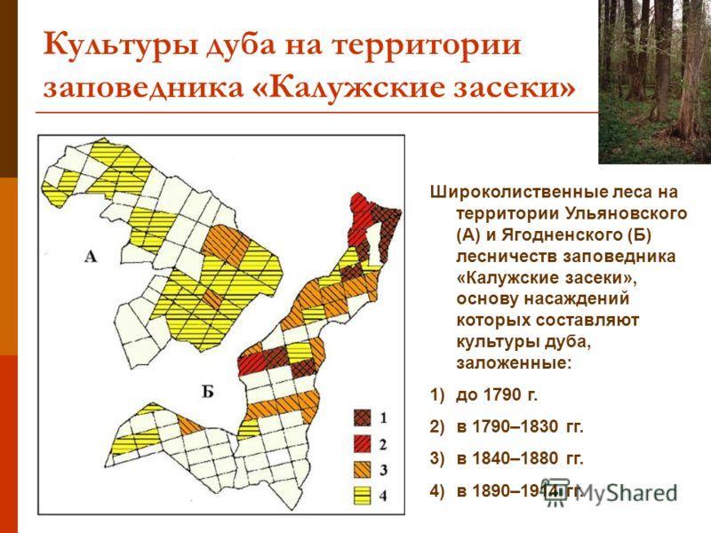 Культуры дуба на территории заповедника «Калужские засеки» Широколиственные леса на территории Ульяновского (А) и Ягодненского (Б) лесничеств заповедника «Калужские засеки», основу насаждений которых составляют культуры дуба, заложенные: 1)до 1790 г.