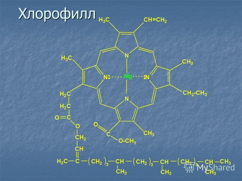 Хлорофилл