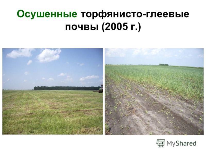 Осушенные торфянисто-глеевые почвы (2005 г.)