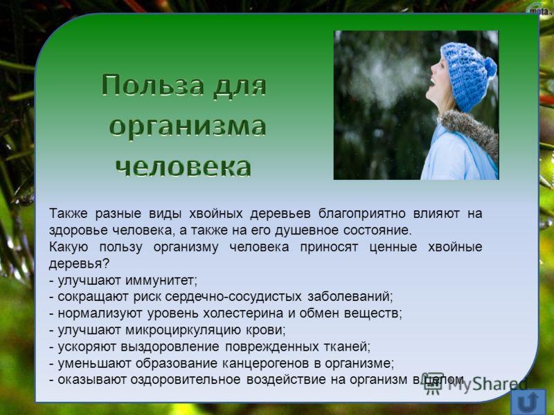 Также разные виды хвойных деревьев благоприятно влияют на здоровье человека, а также на его душевное состояние. Какую пользу организму человека приносят ценные хвойные деревья? - улучшают иммунитет; - сокращают риск сердечно-сосудистых заболеваний; -