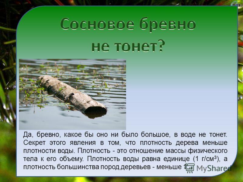 Да, бревно, какое бы оно ни было большое, в воде не тонет. Секрет этого явления в том, что плотность дерева меньше плотности воды. Плотность - это отношение массы физического тела к его объему. Плотность воды равна единице (1 г/см 3 ), а плотность бо