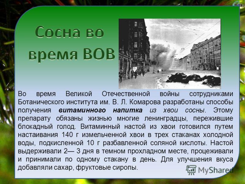 Во время Великой Отечественной войны сотрудниками Ботанического института им. В. Л. Комарова разработаны способы получения витаминного напитка из хвои сосны. Этому препарату обязаны жизнью многие ленинградцы, пережившие блокадный голод. Витаминный на